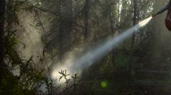 Hose sprays burnt trees in sunlight Stock Footage