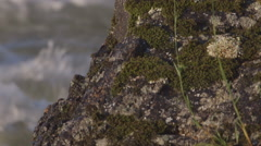 Moss covered rock alongside lake pan Stock Footage