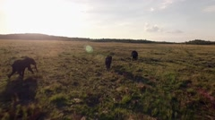 Drone Aerial Shot of Elephants Running through Private Game Farm South Africa Stock Footage