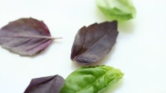 Fresh basil - closeup shot Stock Footage