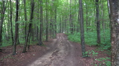 Path Cuts Through the Majestic Forest Stock Footage