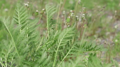Field weeds rustle in the wind Stock Footage