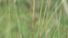 Ground level view in the grass of a field Stock Footage