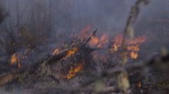 Focus shift between fallen tree forest fire and dead tree branches Stock Footage