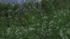 Pan from lakeside wild daisies to full lake view Stock Footage