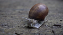 Snail Crawling on the Ground Stock Footage