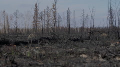 Low shot forest ground following forest fire, grass begins to grow Stock Footage