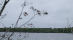 Focus shift from tree branch to lake and back on cloudy day Stock Footage