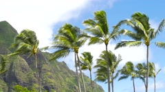 Koolau mountains and Palm Tress Oahu Hawaii Stock Footage