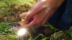 Girl cutting brown cap boletus in the forest Stock Footage