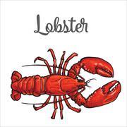 Full length lobster isolated on white background Stock Illustration