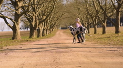 Young girl child playing walking her dog great dane Stock Footage