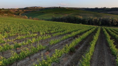 4k aerial drone  footage of vineyards in Tuscany Italy Chianti Stock Footage