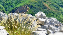 Spikelets grass moves from the wind nature 4k video. Mountain rock peak Stock Footage