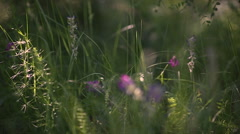 Womens feet are on the morning grass Stock Footage