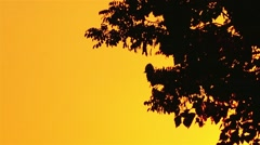 Silhouette of tree branches in yellow sunset sky Stock Footage