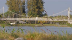 Grass waving in wind in Nong Prachak park with bridge,Udon Thani,Thailand Stock Footage