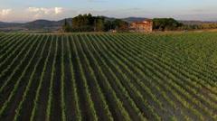 Vineyards in Tuscany Italy Chianti 4k Stock Footage