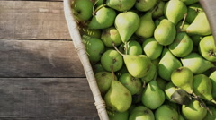 Collecting harvest pears. pears in a wicker basket Stock Footage