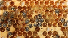 Out of the cocoon bees Stock Footage
