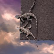 Two lizards on the edge of the roof Stock Photos