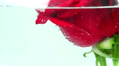 Red rose in glass aquarium, red paint pouring Stock Footage
