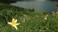 Day lily and lake Nozori, flat color Stock Footage