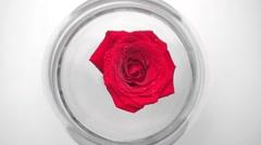 Red rose in glass aquarium Stock Footage