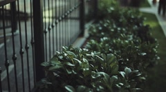View at green bush at iron fence of house. Street, lawn. Sunny evening in city Stock Footage