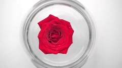 Red rose floating in glass aquarium Stock Footage