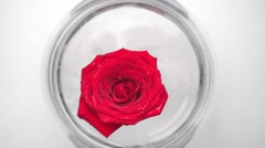 Red rose in glass aquarium on white Stock Footage
