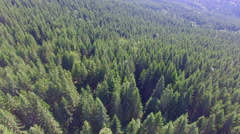 A green forest background in the Ukrainian Karpathians Stock Footage