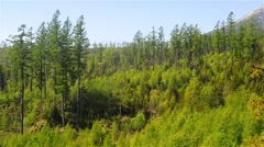 Mixed dense forest at the foothills Stock Footage