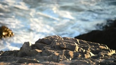 New England foliage, Acadia National park rocks and water Stock Footage