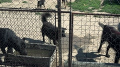 Stray dogs in the wired shelter for dogs  Stock Footage