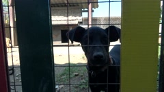 Abandone stray dogs in the shelter for dogs  Stock Footage