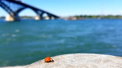 Ladybug by River Stock Footage