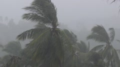 Tropical Monsoon Rain Over Palm Trees in Jungle. Bad Weather Stock Footage