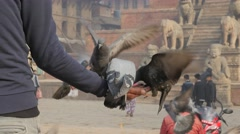 Man feeding pidgeons on Taumadhi Tole square,Bhaktapur,Nepal Stock Footage