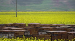 Bees and beehive in rape flower field Stock Footage