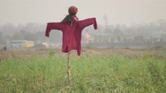 Scarecrow in field,Chitwan,National Park,Nepal Stock Footage