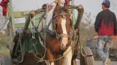 Horse and cart resting,Chitwan,National Park,Nepal Stock Footage
