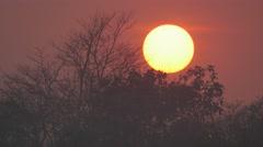 Sun setting through trees,Chitwan,National Park,Nepal Stock Footage