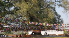 Pilgrims praying under tree at Maha Devi temple,Lumbini,Nepal Stock Footage