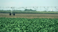 Sunflower field and Irrigation system  Stock Footage