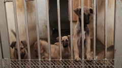 Cute Puppies. Dog Are Playing And Fighting Naughty The Cage Stock Footage