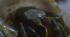 Hermit crab Stock Footage