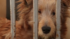 Large Dog. A Dog Barks In The Cell. Dog In A Cage Stock Footage