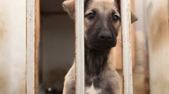 Dog Barking And Looking Through Kennel Arkistovideo