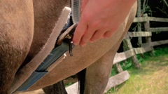 HORSE SADDLE BILLET STRAP CINCHING TACK Stock Footage